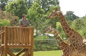 Tourisme Allier Le Pal Zoo